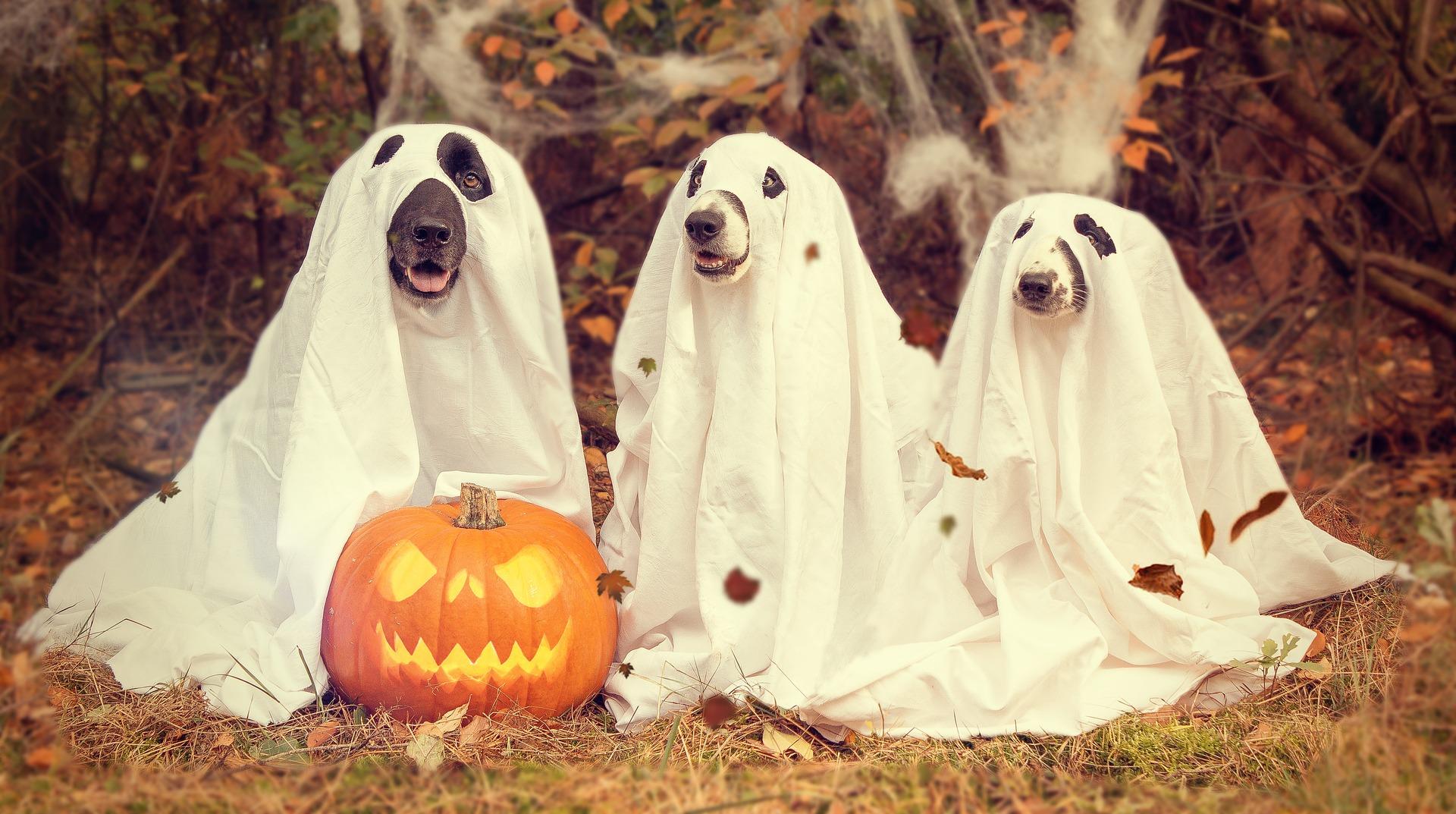 Halloween z psem – o czym warto pamiętać 31 października