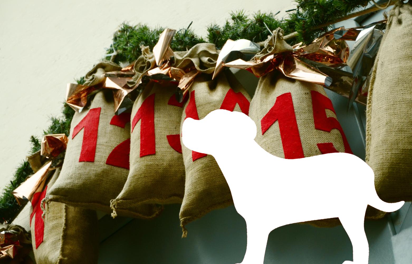Kalendarz adwentowy dla… psów – miły dodatek na grudzień i nie tylko